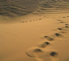 Footprints-in-the-desert